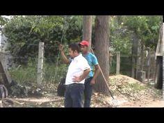 Agencia municipal poda árboles en colonias, cambiado imagen visual, agos...