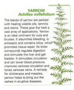 Yarrow leaf uses