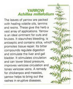 Yarrow leaf uses