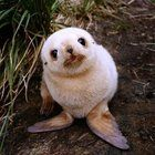 Thought everyone could use a baby seal today