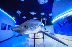 Asimismo habrá fotografías de 15 especies, tomadas en países como México, Ecuador, Cuba, Indonesia y Bahamas, además de una impresión en gran formato de tiburón ballena.