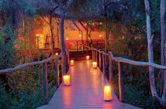 Treetop getaways and Lodges South Africa