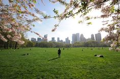 Sheep Meadow (in Central Park) is one of the most relaxing places in the city to be on beautiful spring and summer days.