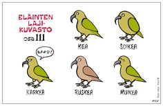 Eläinlajit 111 Learn Finnish, Finnish Words, Finnish Language, Hilarious, Funny, Finland, Vocabulary, Jokes, Teaching