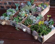 Succulent gardens in recycled timber drawers. by thesucculentguy
