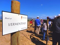 Ayama Wines celebrates 10 years of winemaking by planting South Africa`s first Vermentino