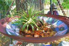 Old light shade turned flower pot bird bath!