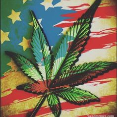 classofanarchists:  God Bless the Herb #ganja #cannabiscup #coupleswhosmoke #cannabis #cannabiscommunity #weedlife #wife #weed #maryjane #marijuana #morningbowls #usaforhemp #newmexicoforweed #highsociety #hightimes #hempseeds #hemp #cannabiscommunity