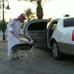 Arab Swag, Saudi Arabia, Van, Dogs, Animals, Animales, Animaux, Pet Dogs, Doggies