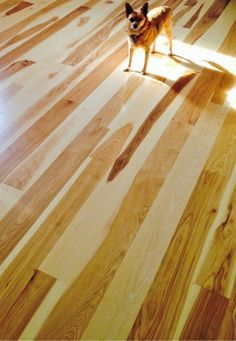 Hickory hardwood wide plank flooring mill-direct and USA made. Custom plank sizes, unfinished or prefinished. Hickory Wood Floors, Real Wood Floors, Rustic Floors, Wide Plank Flooring, Engineered Hardwood Flooring, Installing Hardwood Floors, Kitchens, Cabin Ideas, Cuisine