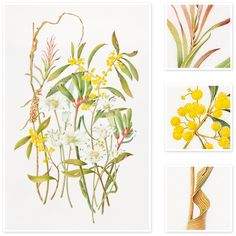 Mixed flowers (Australian Natives) | Sharon Field | Botanical Artist, Inspiration for Botanical Sketchbooks for Art Students at CAPI::: Create Art Portfolio Ideas milliande.com, Art School Portfolio Work, , Botanical, Flowers, Plants, Leaves,Stem Seed, Nature, Sketching, Herbarium