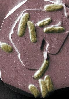 Electric Bacteria For Bio-Batteries: A Breakthrough In Clean Energy