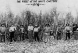 Picture relating to Ingham - titled 'Cane cutters in the sugar cane fields at Ingham, Queensland, 1904'