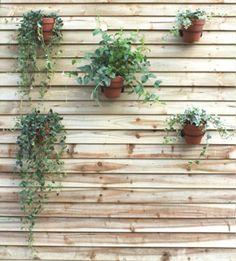 wall plant pot - Google Search