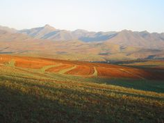 Google Image Result for http://upload.wikimedia.org/wikipedia/commons/3/33/African_landscape.jpg