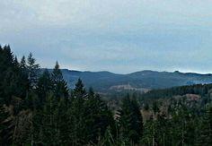 Outside of St. Helens Oregon. Oregon is land of the Christmas trees. :)