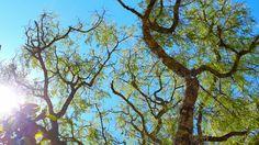Fotografía de Naturaleza - Greivin Chavarria Bolaños  San Isidro de Heredia, Costa Rica - 2015  Greivinchavarria@gmail.com