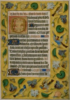 Cornell Museum of Art, Flemish, Illuminated manuscript page with a naturalistic border of birds, insects, and flowers, ca. 1500–10
