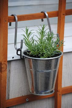 Perfect Summer Cocktail: Lavender Martini - Hang herbs in silver buckets on lattice -