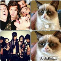 #bvb  beautiful. Even grumpy cat agrees