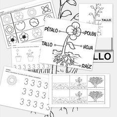 Fichas de actividades para trabajar con las plantas Spanish Lessons, Teaching Spanish, Teaching Resources, Bilingual Classroom, Bilingual Education, Science For Kids, Science Activities, Plant Science, Dual Language