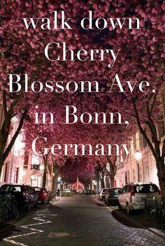 Walk down Cherry Blossom Ave. in Bonn, Germany