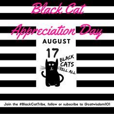 black cat appreciation day @catwisdom101 #blackcattribe