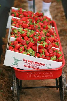 a wagon load of strawberries