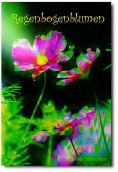Regenbogenblumen http://www.farben-reich.com/
