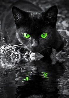Green eyed Reflection