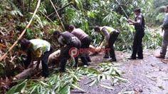 Pohon Tumbang Lumpuhkan Jalur Penglipuran - http://denpostnews.com/2017/07/09/pohon-tumbang-lumpuhkan-jalur-penglipuran/