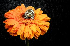 frog on flower by Mark Bridger, via 500px