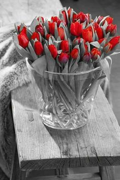 I love tulips just before they fully bloom. That shape is so innocent and fresh. Very sweet. My Flower, Fresh Flowers, Spring Flowers, Flower Power, Beautiful Flowers, Beautiful Gorgeous, Deco Floral, Red Tulips, Red Roses