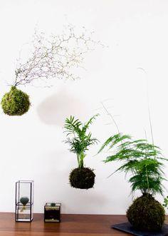Kokedama Terrarium Plants, Cool Stuff, Green, Blue Prints