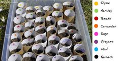 gardening with kids -- plant seeds in toilet rolls