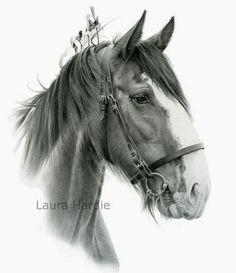 Laura Hardie (pencil drawing)