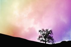 TITLE ~ rainbow oak silhouette | the silhouette of a single live oak tree sits in a multicolor rainbow sunset