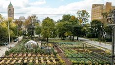 First Urban 'Agrihood' In America Feeds 2,000 Households For Free