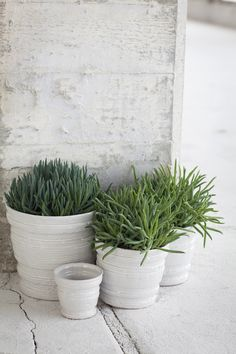 outdoor living with white containers