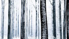 snow child - Google Search