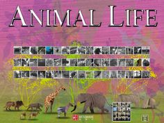 Animal Life (free) -- illustrated guide to animal photos and videos.