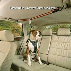 Doggy Zip line. lol a Tru-Smart Harness and Auto Zip Line. For those unexpected times when you need to slam on your brakes! Animals And Pets, Cute Animals, Cockerspaniel, Dog Runs, Dog Care, Puppy Care, Mans Best Friend, Doge, Dog Gifts