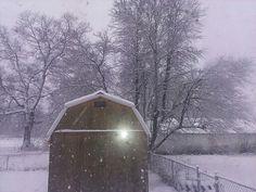 Winter in my back yard