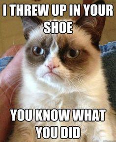 Grumpy Cat on revenge