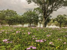 lake, flowers, nature | créditos: Tati Prisco Nassr