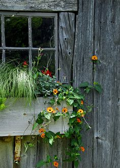Old barn with window box |Pinned from PinTo for iPad|