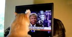 Katze kratzt Trump und macht uns sehr stolz! #News #Unterhaltung