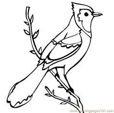 cardinal coloring sheet classroom pinterest cardinals bird