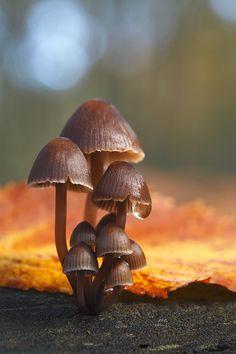 """ Autumn Esence "" By: Juan Pavon"