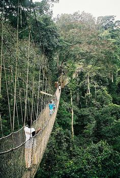 Re-Pin:  One of the many amazing parks I would love to explore while in Ghana.  The wildlife here looks incredible.   Kakum National Park - Ghana